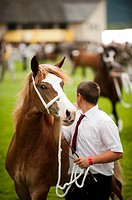 Horses on show at the Royal Welsh Agricultural Show, Builth Wells, Wales, 2011