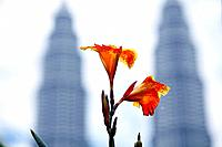 Orange gladioluses with Petronas Towers in the background, Kuala Lumpur, Malaysia, Asia
