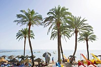 Palm trees on the beach in the sunlight, Marbella, Andalusia, Spain, Europe