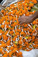 Hand reaching to pick up orange flower