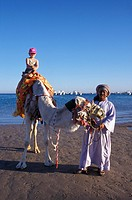 Tourist riding a camel on the beach, Hurghada, Red Sea, Egypt, Africa