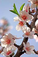 spring romance bloom