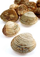 Clam, venus verrucosa, Shells against White Background
