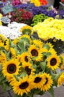 Sunflower and other flowers for sale on French market stall