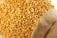 Grain , pulses peas skinned yellow or bengal gram dal cicer arietinum chick peas in jute sack spread on white background