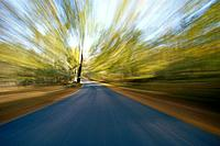 Racing on Rural Road Past Blurred Trees