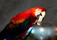 parrot eating 1 dollar bank note