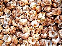 shells bachgroung