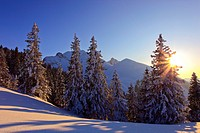 snow_covered conifer forest in the sunset with mountain range in the background, Switzerland, Gurnigel