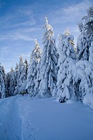 winter landscape in the Black Forest, Germany, Baden_Wuerttemberg, Black Forest, Hornisgrinde