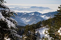 winter landscape with spruce forest in the Black Forest, Germany, Baden_Wuerttemberg, Black Forest