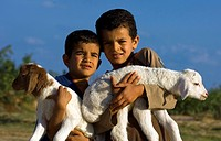 domestic sheep Ovis ammon f. aries, two boys with lambs on their arms, Tunisia