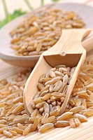 Khorasan wheat commercialized under the name Kamut is an ancester of durum wheat and was cultivated in the region of the Fertile Crescent in Middle_Ea...