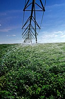 A center pivot irrigation system irrigates potatoes near Holland, Manitoba, Canada