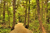 Wild Pacific Trail, Vancouver Island, British Columbia, Canada