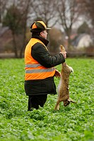 European hare Lepus europaeus, shooter of a battue standing in a field of foliage plants holding a hare hunted down by the hind legs, Germany