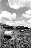 Field with straw bales, Italy, Basilicata