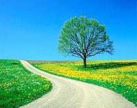 Country road and tree, spring