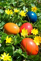 coloured easter eggs lying in flower meadow