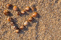 Sea shells in heart