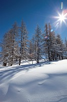 Virgin snow and sunshine on the Via Lattea, Sauze d'Oulx, Piemonte, Italy