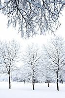 Englischer Garten's Snow Covered Trees