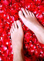 Woman´s Feet in Petals