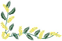 Mimosa border