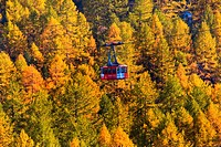 cable car over larches, Switzerland, Valais
