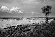 Biebrza swamps