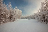Winter landscape. Trees in a snow