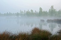 morning mist over bog lake, Netherlands, Limburg, Groote Peel National Park