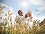 Scientist examining oat stalks in field