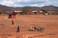 geography / travel, Tanzania, Massai Community in Piyaya Village, Northern Tanzania