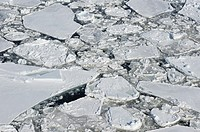Ice Floe  Weddell Sea, Antarctic Peninsula, Antarctica