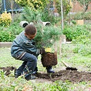 Mixed race boy planting a tree