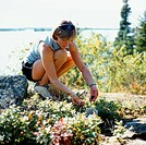 Woman Collecting Flowers, Shoal Lake, Ontario