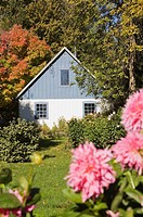 Dahlia flowers and barn house in autumn, Lanaudiere, Quebec, Canada. This image is property released LUPR0170 for calendar, book, magazine and editori...
