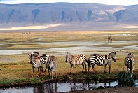 Zebras at a water hole _ Tanzania