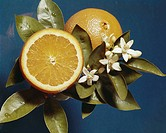 Lemon with blossom, close_up
