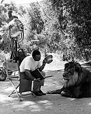TV series, Daktari, USA 1966_1968, director: Paul Landres, scene with: John Florea, Clarence the Cross_Eyed Lion,