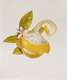Peeled orange with blossom on white background, close_up