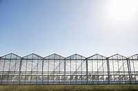 Greenhouses against blue sky