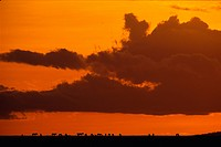 Clouds Over the Serengeti Plain