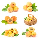 collection of fresh apricot fruits
