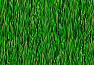 Green Grass Patch Background