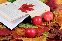 Autumn, the book and red apples