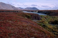 Tundra in Autumn in Russia