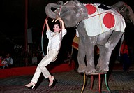 An elephant stands on a stool, whilst a woman swings from a hoop around it´s trunk, in a circus in Hanoi, Vietnam.
