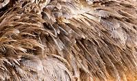 Ostrich fur